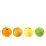 Fresh citrus Stock Photo