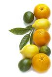 Fresh citrus fruit Royalty Free Stock Photos