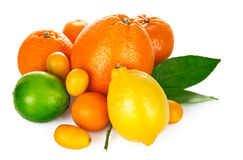 Fresh citrus fruit with green leaf Stock Photo