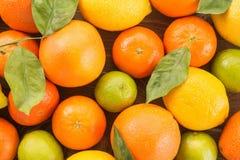 Fresh citrus fruit Royalty Free Stock Image