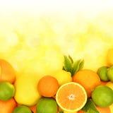 Fresh citrus fruit Royalty Free Stock Photography