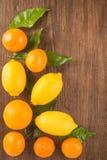 Fresh citrus fruit Stock Images