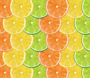 Fresh citrus fruits background Royalty Free Stock Images