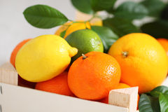 Fresh citrus fruits in the box Royalty Free Stock Image