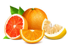 Fresh citrus fruits with leaves. Stock Image