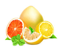 Fresh citrus fruits with leaves Stock Photo