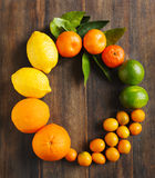 Fresh citrus fruits with leaves. Royalty Free Stock Photos