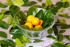 Fresh citrus fruits in the vase Royalty Free Stock Photography