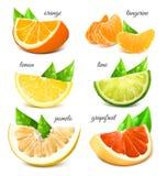 Fresh citrus fruits. Royalty Free Stock Images
