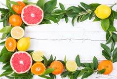 Fresh citrus fruits. Royalty Free Stock Photo
