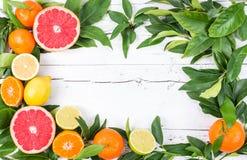 Fresh citrus fruits. Royalty Free Stock Photos