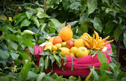 Fresh Citrus Harvest Royalty Free Stock Photography