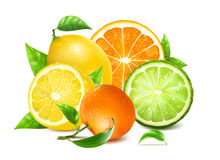 Fresh citrus with leaves Stock Images