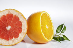 Fresh citrus Stock Photography