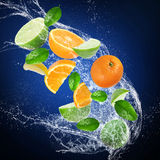 Fresh citruses with water splash Stock Image