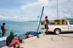 Fresh clam. Clam Transportation from fisherman boat Stock Images
