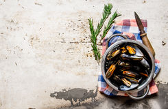 Fresh clams in the bowl with a knife and rosemary. On rustic background. Free space for text . Top view Stock Image