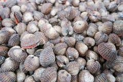 Fresh clams at farmers sea food market. Fresh clams at seafood market, Samui island, Thailand Stock Images