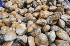 Fresh clams at farmers sea food market. Fresh clams at seafood market, Samui island, Thailand Stock Photos