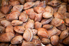 Fresh clams at a fish market Royalty Free Stock Images
