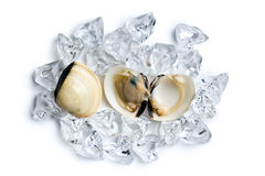 Fresh clams on ice cubes Royalty Free Stock Photography