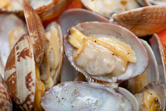 Fresh clams on an iron skillet Stock Image