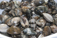 Fresh clams Stock Images