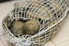 Fresh clams in mesh seafood bag Royalty Free Stock Photos