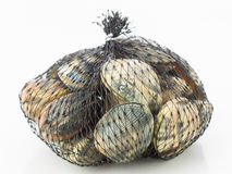 Fresh clams in net  on white. Background Stock Photo