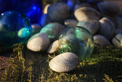 Fresh Clams Royalty Free Stock Photos