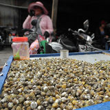 Fresh clams for sale, local food. Street vendor selling a large amount of fresh clams at a market Stock Image