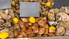 Fresh clams for sale at market. With a blank sign above and surrounded by marine oysters Royalty Free Stock Photo