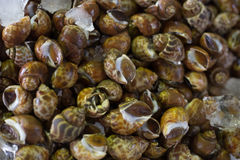 Fresh Clams Shellfish Seafood the Fresh market Royalty Free Stock Images