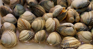 Fresh clams at spanish seafood market Stock Photo