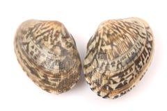 Fresh clams Royalty Free Stock Image