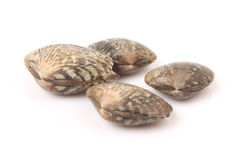 Fresh clams Royalty Free Stock Photography