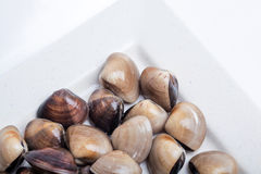 Fresh clams on white background Stock Images