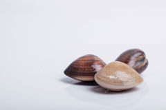 Fresh clams on white background Royalty Free Stock Photo