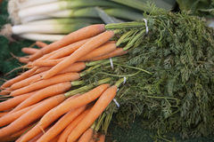 Fresh clean carrots with foliage on the market Royalty Free Stock Photo