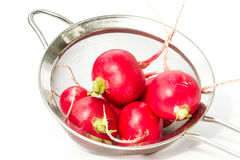 Fresh clean radishes. Fresh clean red  radishes in a strainer over a white background Royalty Free Stock Images