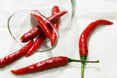 Fresh and clean red and green chili Stock Images