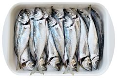 Fresh cleaned fishes Stock Photo