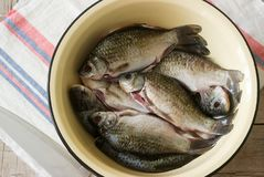 Fresh cleaned river carp in a metal basin on a table. stock images