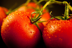 Fresh Cleaned Tomatoes on the Vine Royalty Free Stock Photos