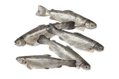 Fresh cleaned trouts Royalty Free Stock Image
