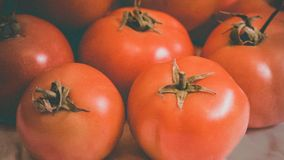 fresh and clear Tomatoes Royalty Free Stock Photography