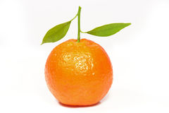 Fresh clementine. On white background Royalty Free Stock Image