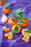 Fresh clementines on purple. Tablecloth Royalty Free Stock Photos