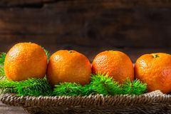 Fresh Clementines or Tangerines and Xmas Tree Branches. In the Basket on Brown Wooden Table Royalty Free Stock Image