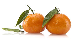 Fresh Clementines With Leafs Royalty Free Stock Photos
